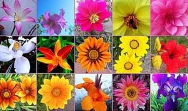 """""""El debate de las flores"""", un romance sefardí para Tu biShvat"""