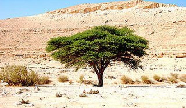 Las plantas en la biblia 2 parte rboles y plantas for Aeiou el jardin de clarilu mp3
