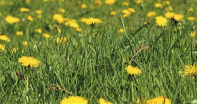 Las plantas en la Biblia (6ª parte): cardos y granos