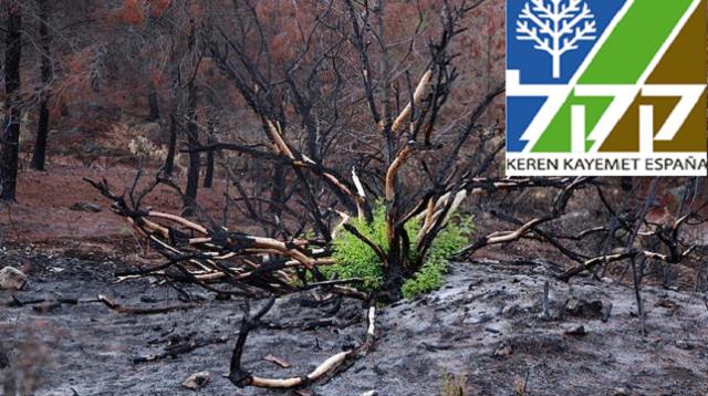 Hay que reponer las raíces quemadas, con Michael Adari del KKL