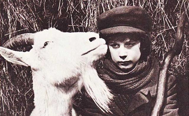 Zlatheh, la cabra