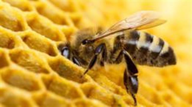 El secreto de la miel